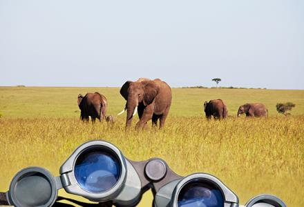 Safari in Zuid-Afrika